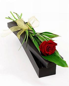 Single Rose Gift